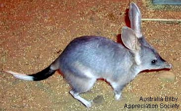 bilby2-appreciation.jpg